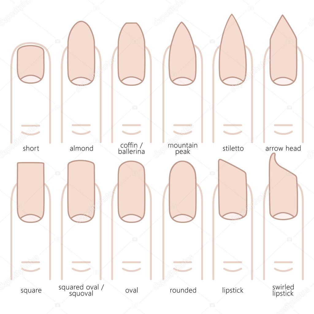 Types Of Nail Shapes Stock Vector C Lazuin Gmail Com 110309184